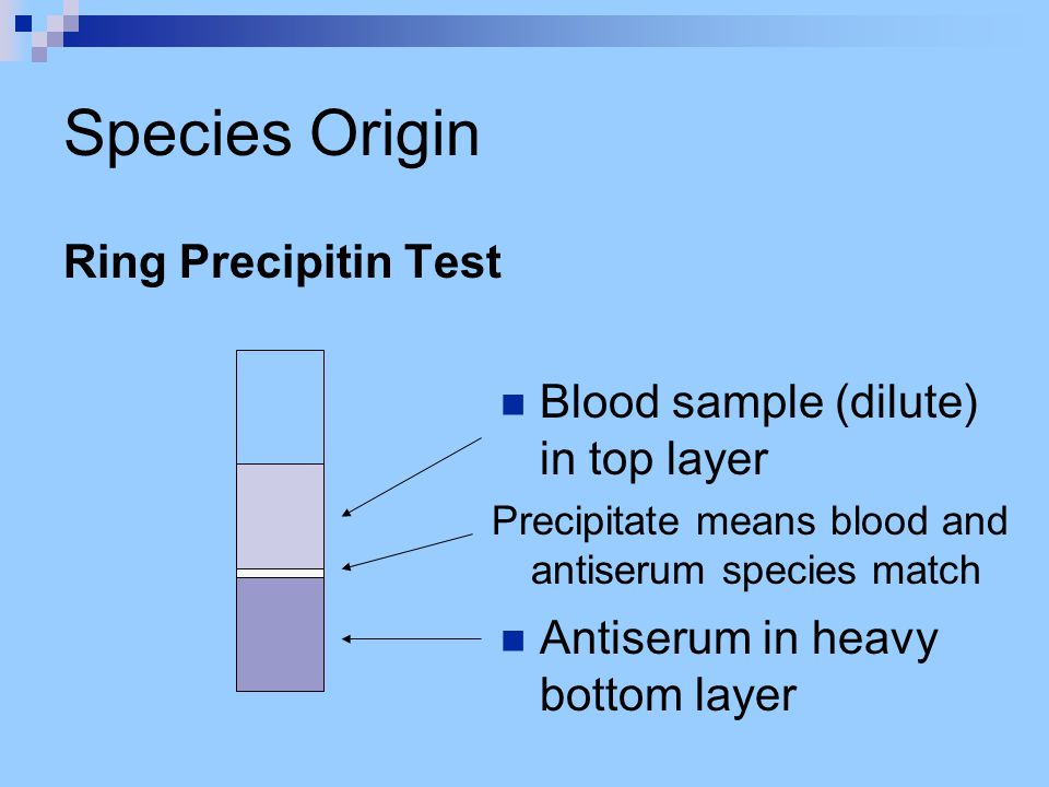 Species Origin Ring Precipitin Test Blood sample (dilute) in top layer