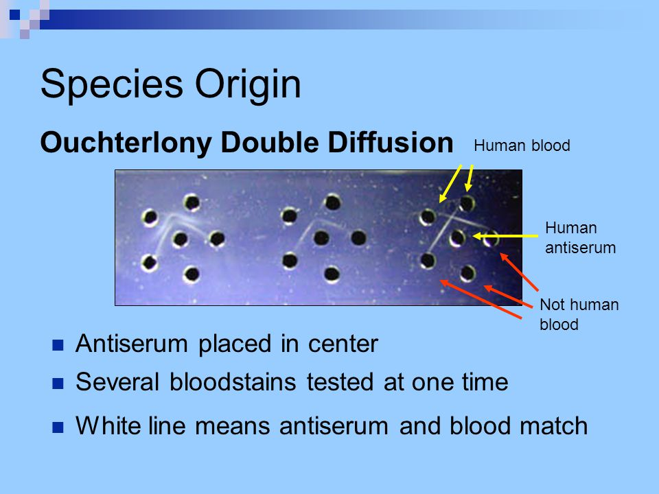 Species Origin Ouchterlony Double Diffusion Antiserum placed in center