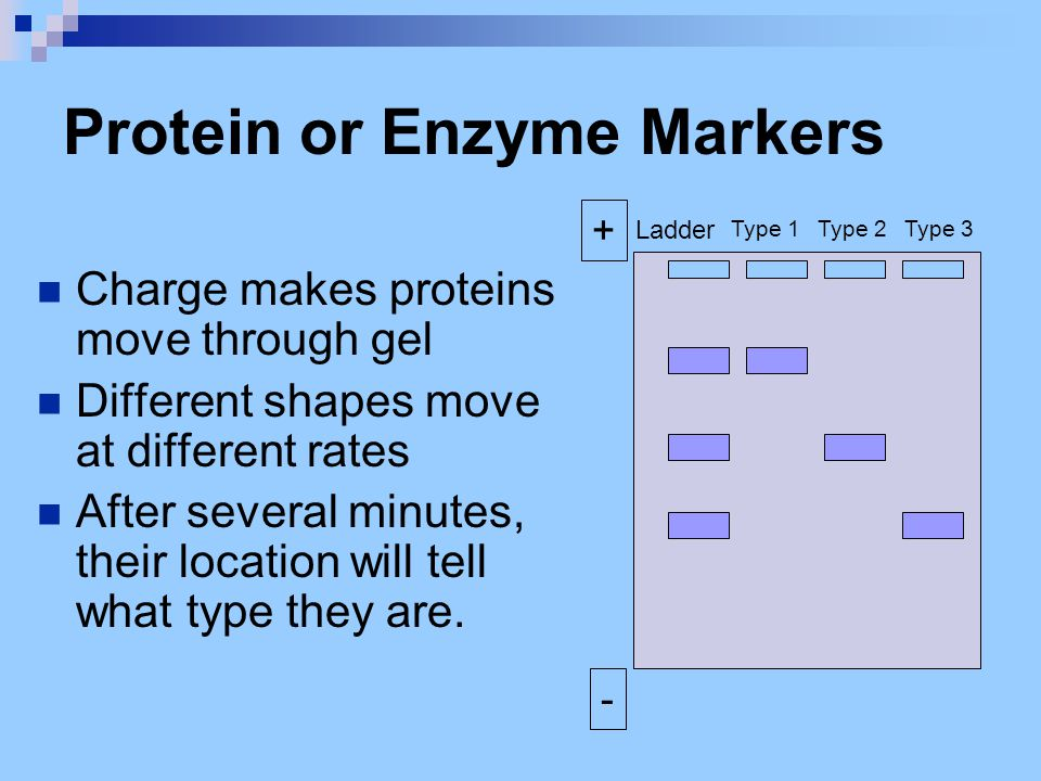 Protein or Enzyme Markers
