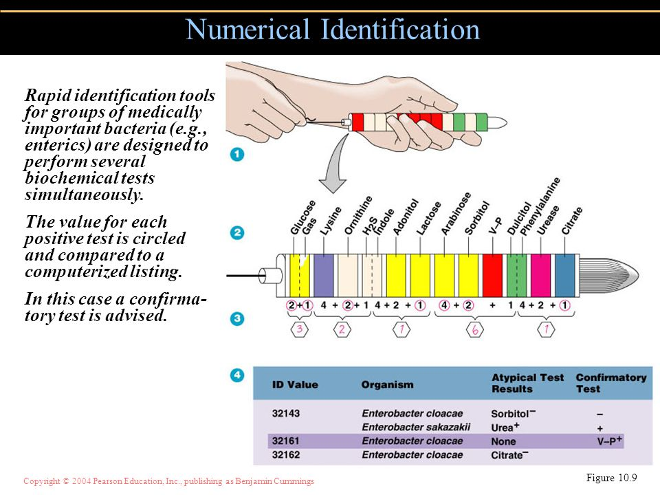 Numerical Identification
