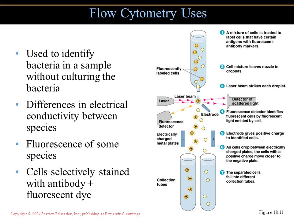 Flow Cytometry Uses Used to identify bacteria in a sample without culturing the bacteria. Differences in electrical conductivity between species.