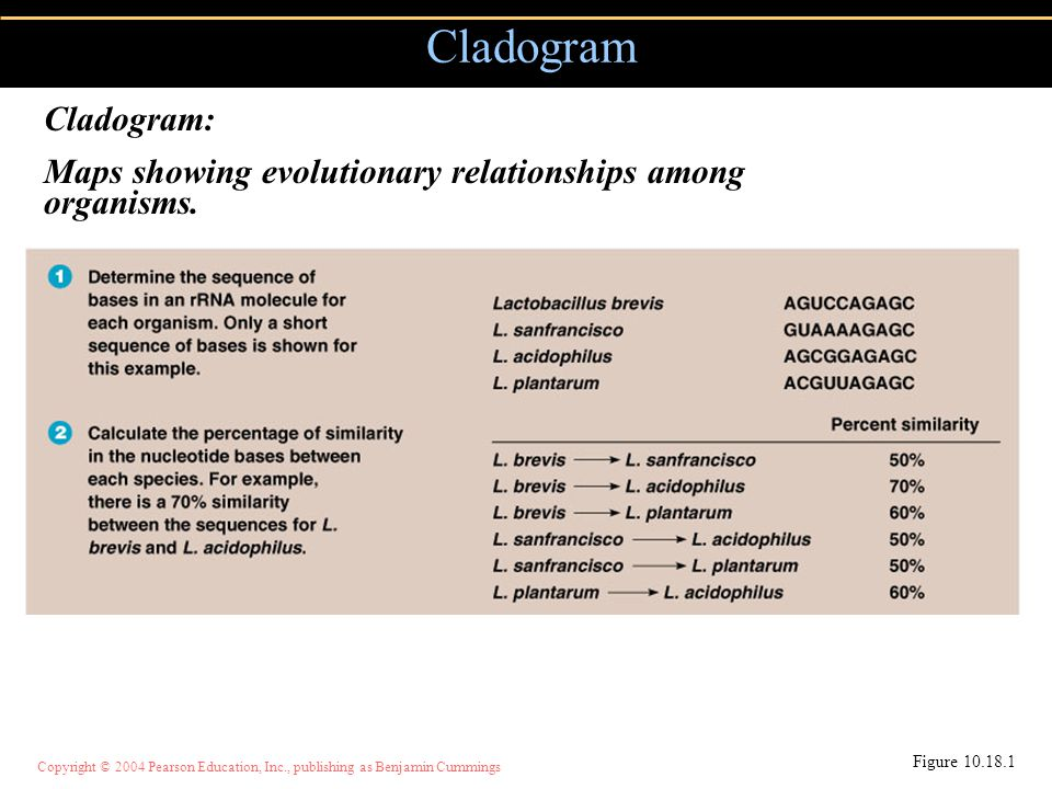 Cladogram Cladogram: Maps showing evolutionary relationships among organisms. Figure