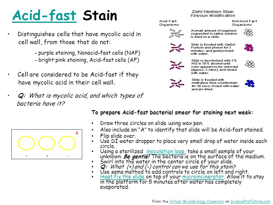 Acid-fast Stain Distinguishes cells that have mycolic acid in