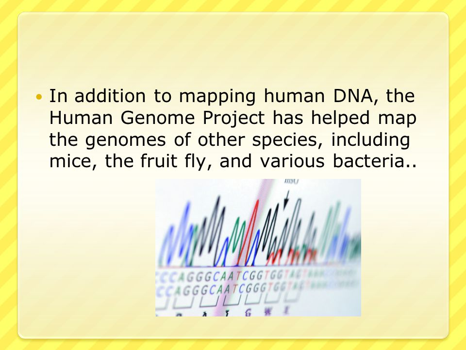 In addition to mapping human DNA, the Human Genome Project has helped map the genomes of other species, including mice, the fruit fly, and various bacteria..