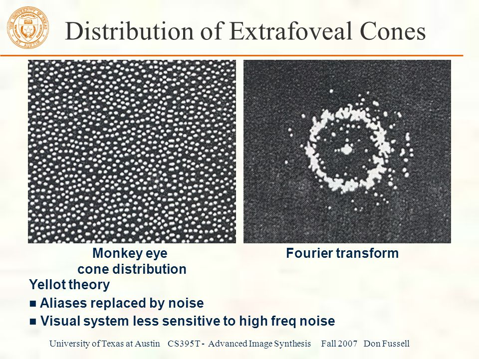 Distribution of Extrafoveal Cones
