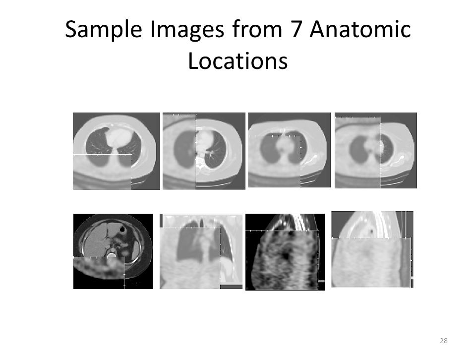 Sample Images from 7 Anatomic Locations