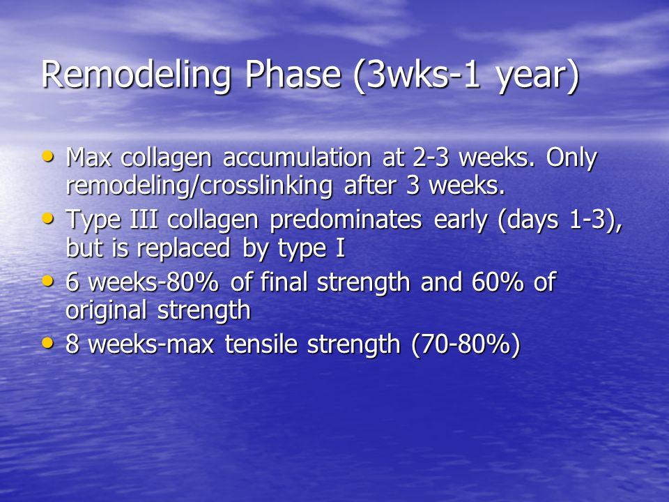 Remodeling Phase (3wks-1 year)