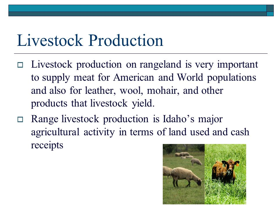 Presentation (.ppt) Livestock Production.