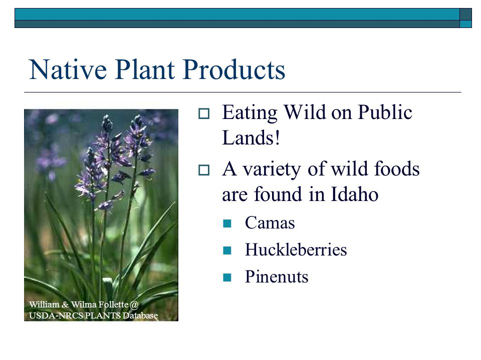 Native Plant Products Eating Wild on Public Lands!