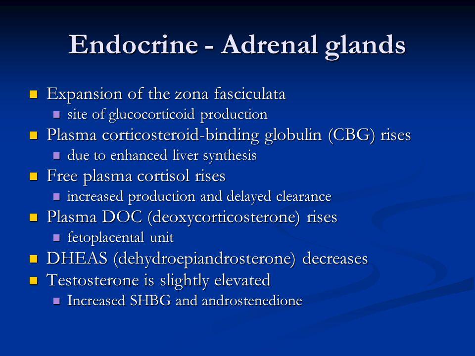 Endocrine - Adrenal glands