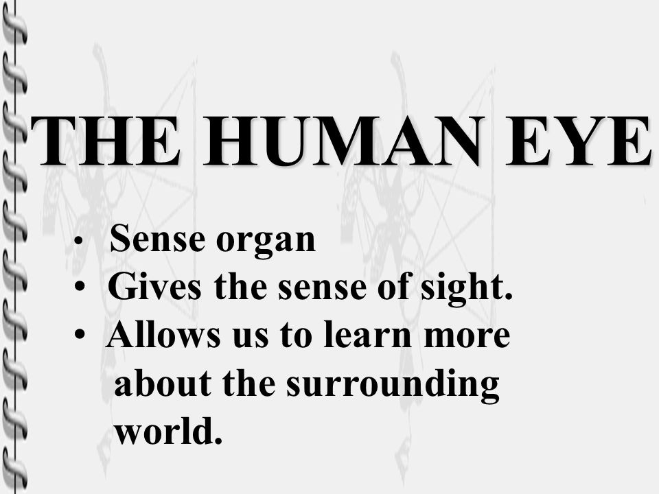 THE HUMAN EYE Gives the sense of sight. Allows us to learn more