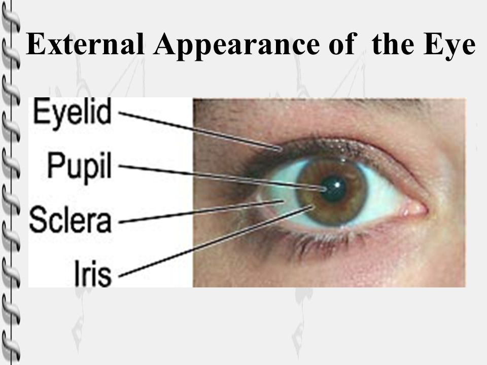 External Appearance of the Eye
