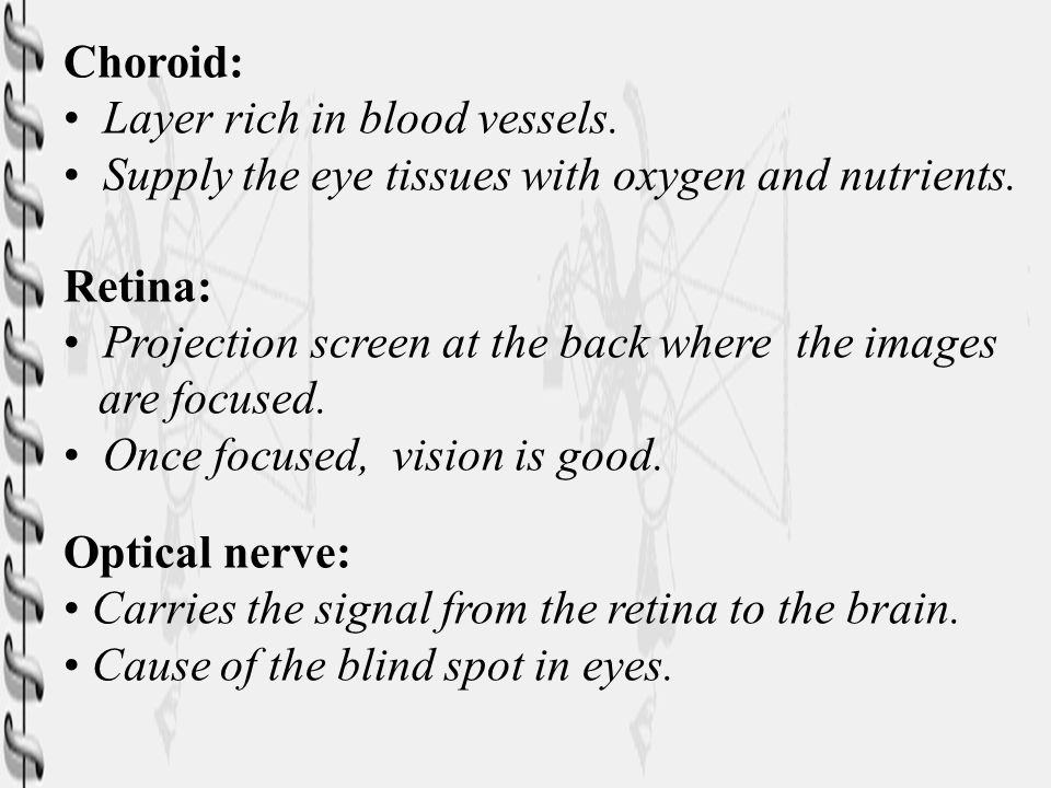Choroid: Layer rich in blood vessels. Supply the eye tissues with oxygen and nutrients. Retina: Projection screen at the back where the images.