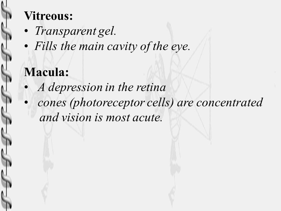 Vitreous: Transparent gel. Fills the main cavity of the eye. Macula: A depression in the retina.