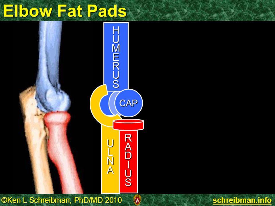 Elbow Fat Pads H U M E R S L N A CAP D I