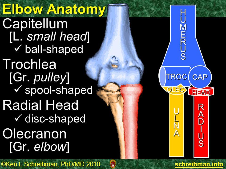 Elbow Anatomy Capitellum Trochlea Radial Head Olecranon