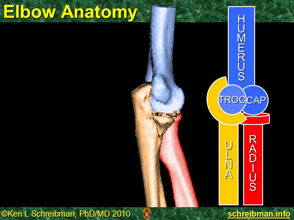 Elbow Anatomy H U M E R S A D I CAP L N TROC