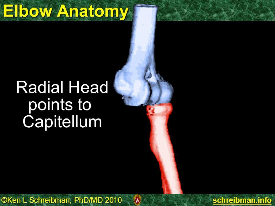 Radial Head points to Capitellum