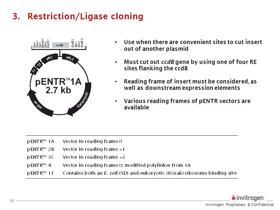 Restriction/Ligase cloning