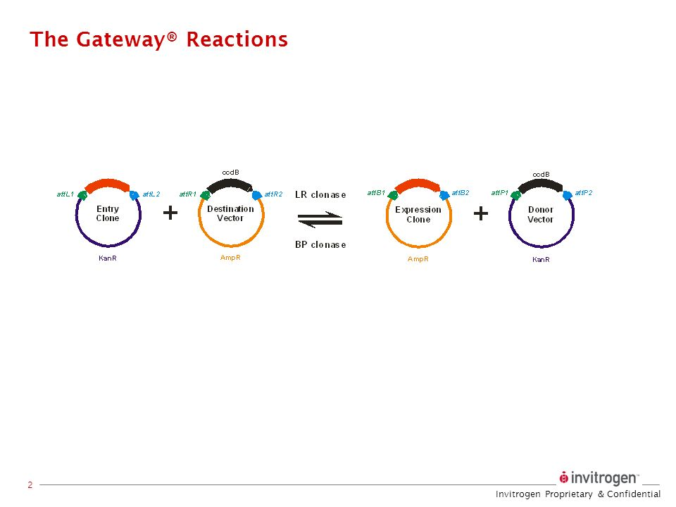 The Gateway® Reactions