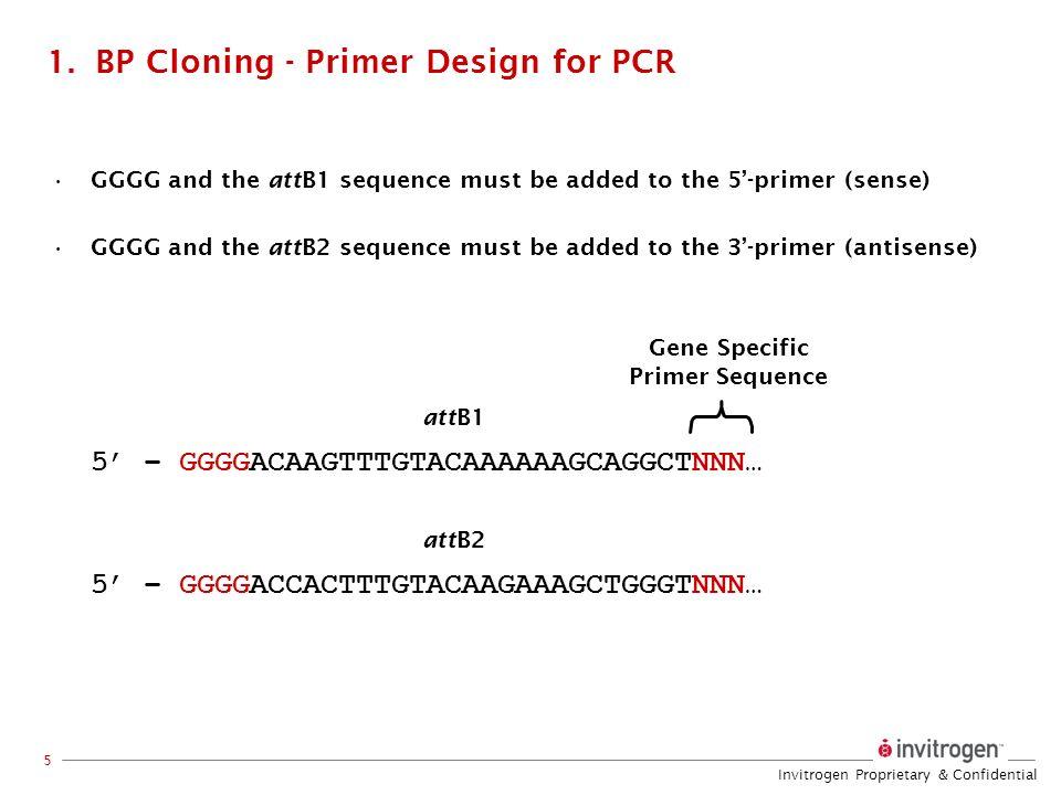 BP Cloning - Primer Design for PCR