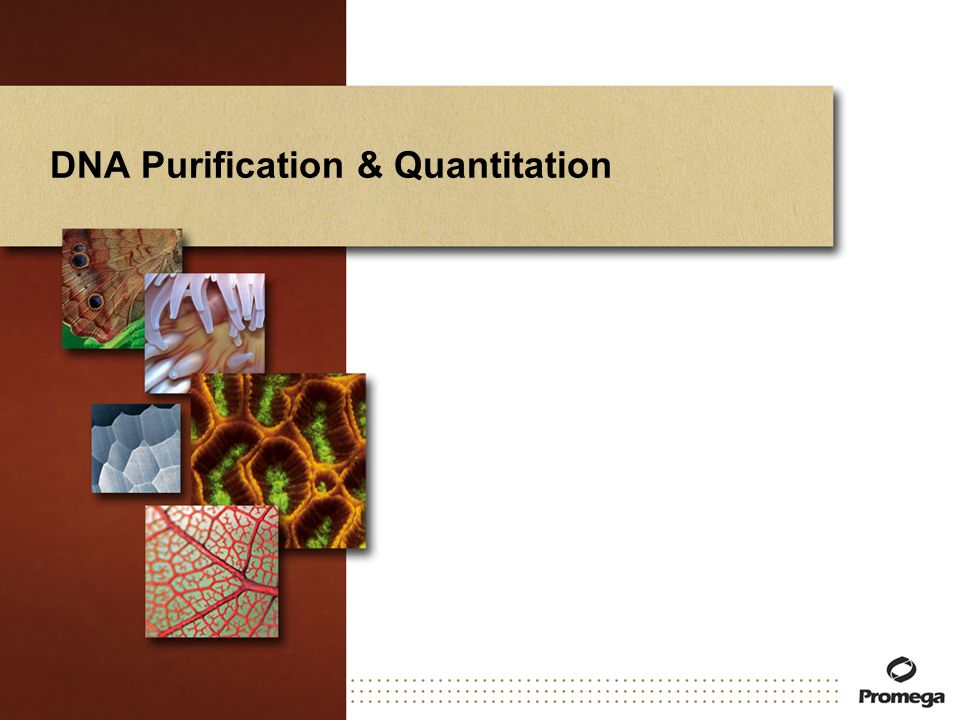 DNA Purification & Quantitation