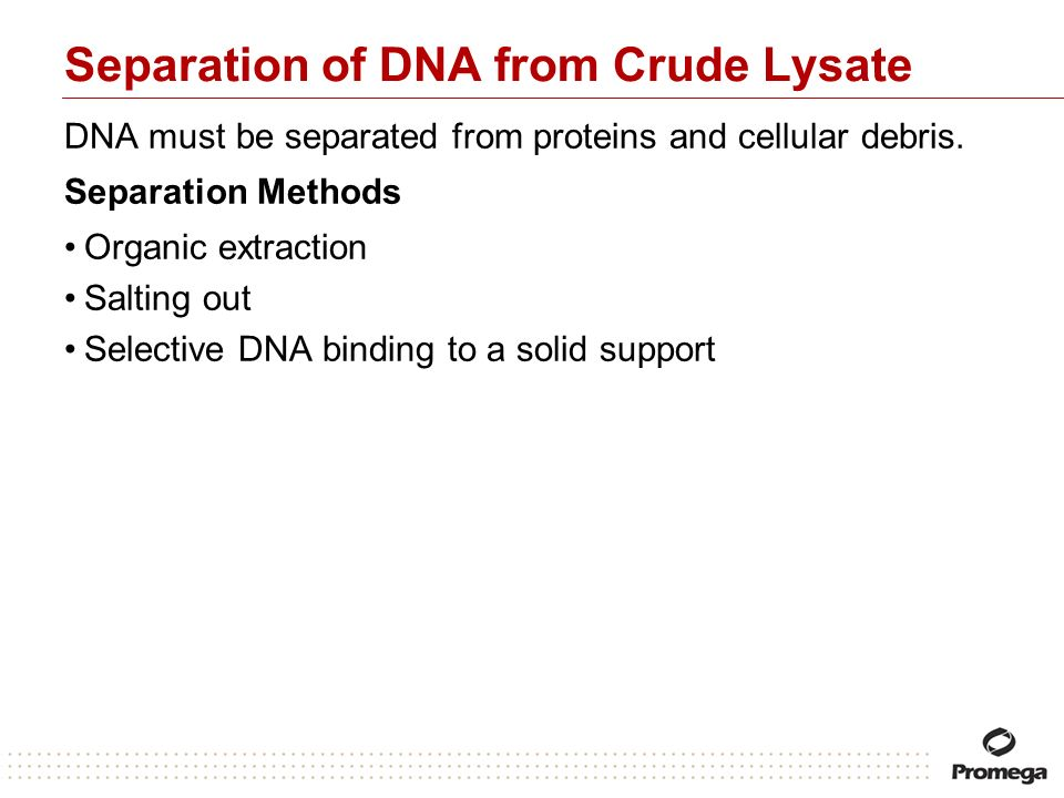 Separation of DNA from Crude Lysate