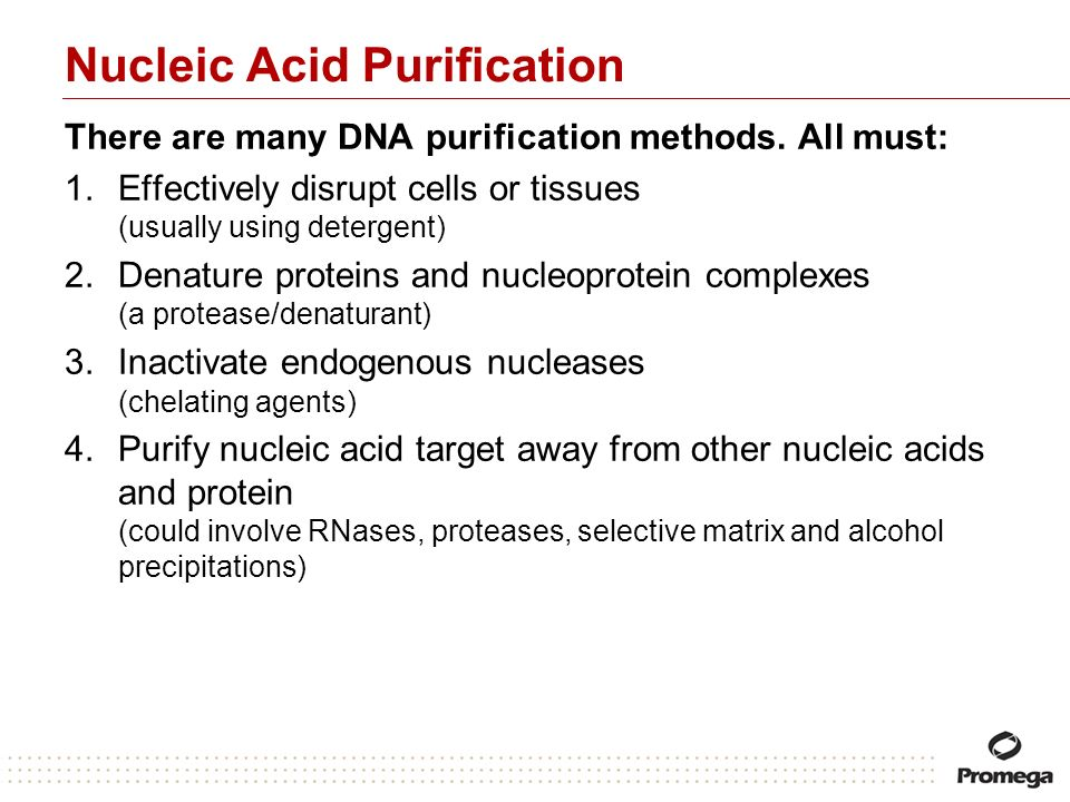 Nucleic Acid Purification