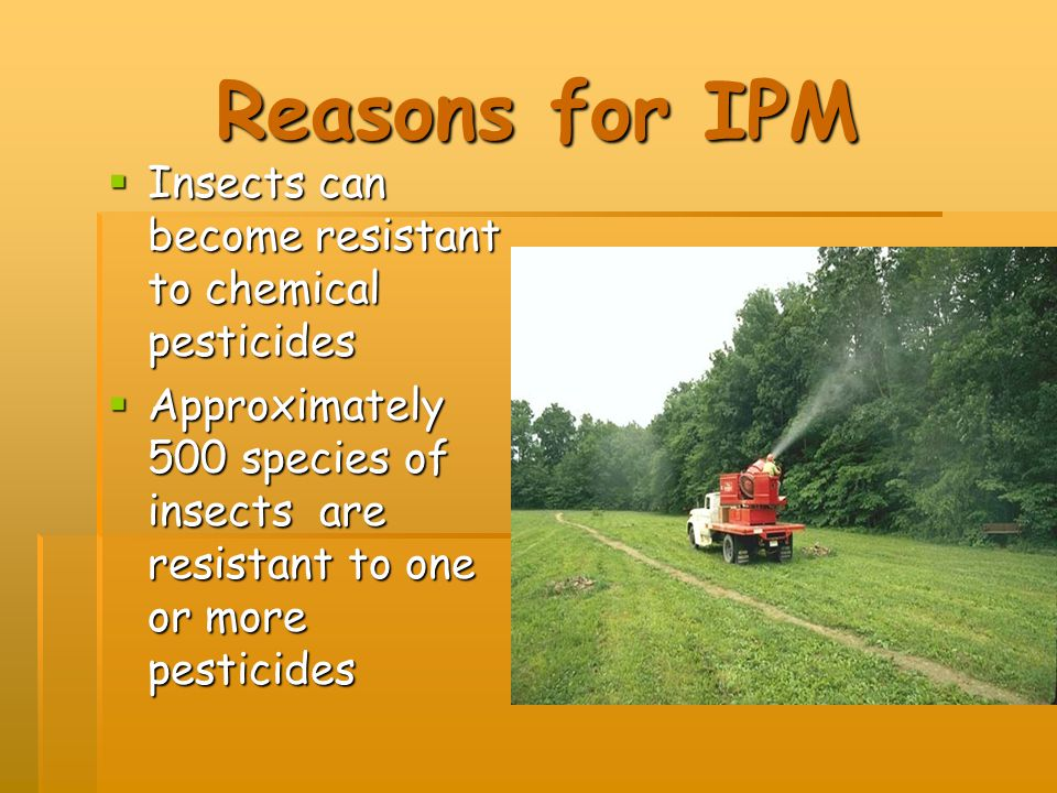 Reasons for IPM Insects can become resistant to chemical pesticides
