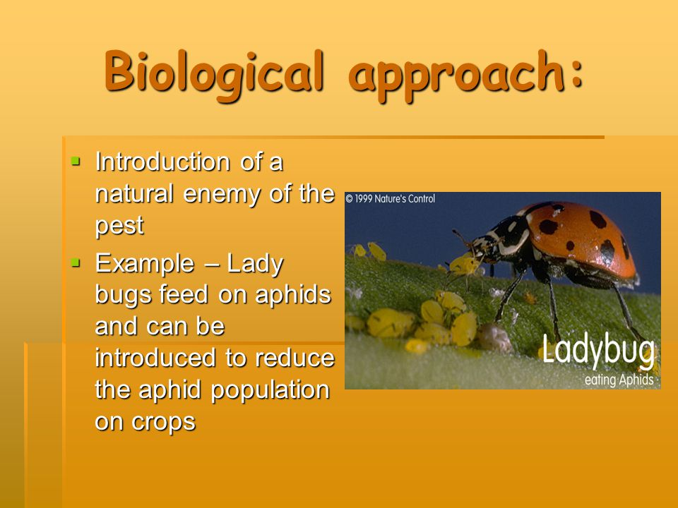 Biological approach: Introduction of a natural enemy of the pest