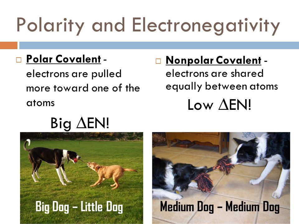 Polarity and Electronegativity
