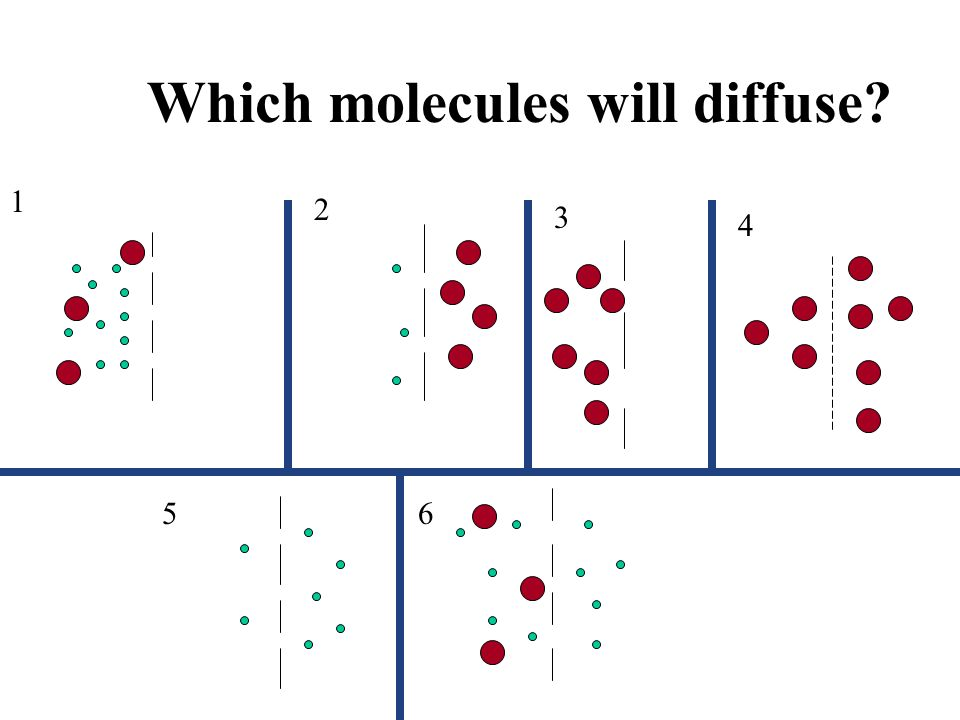 Which molecules will diffuse