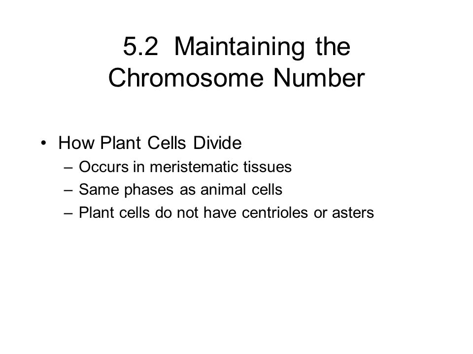 5.2 Maintaining the Chromosome Number
