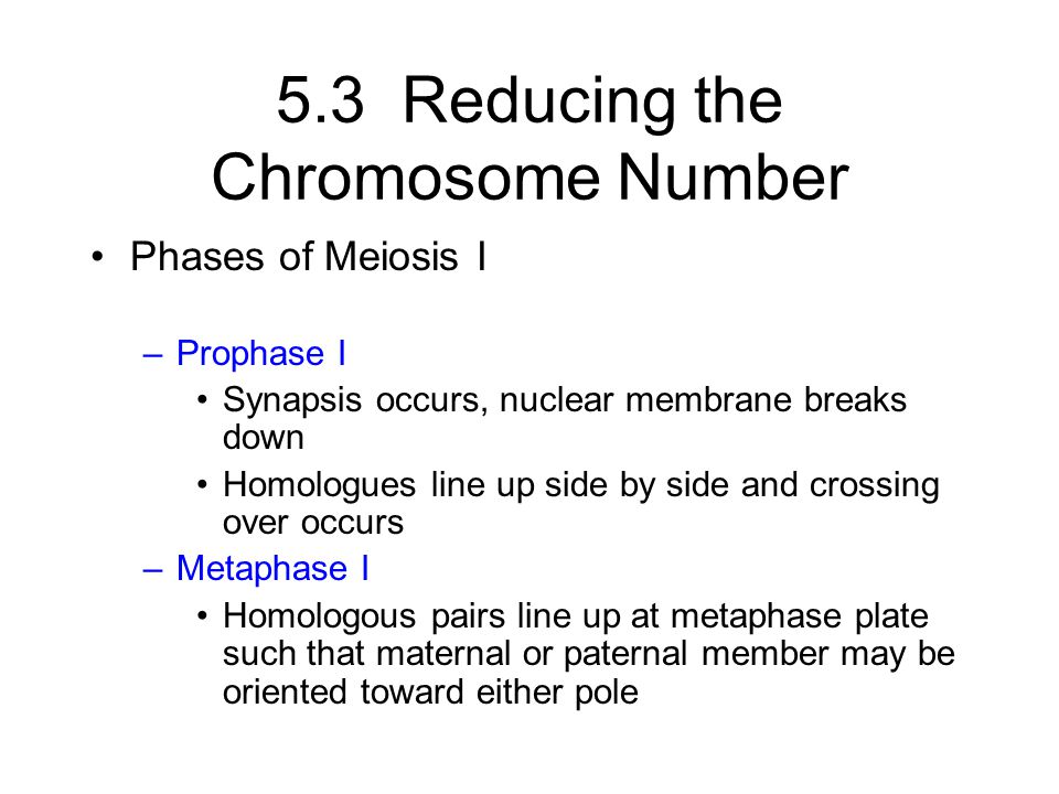 5.3 Reducing the Chromosome Number