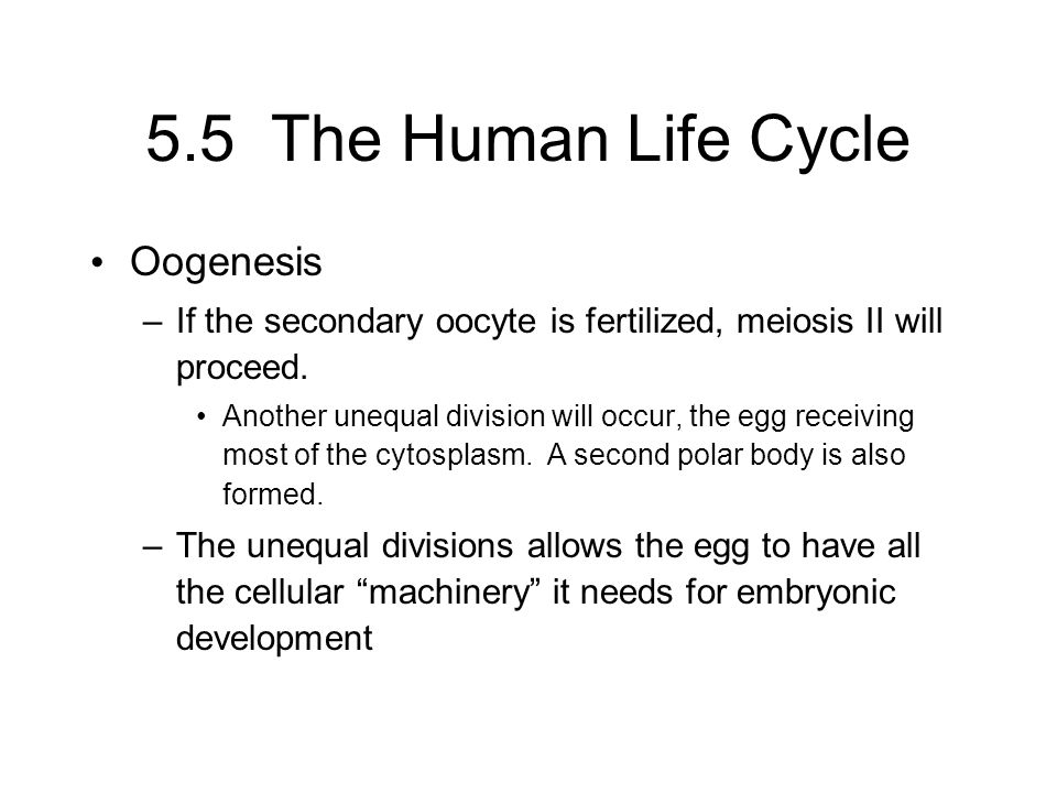 5.5 The Human Life Cycle Oogenesis