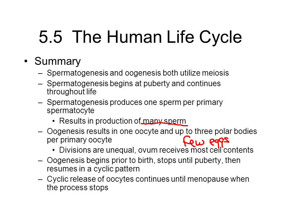 5.5 The Human Life Cycle Summary
