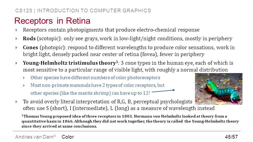 Receptors in Retina Receptors contain photopigments that produce electro-chemical response.