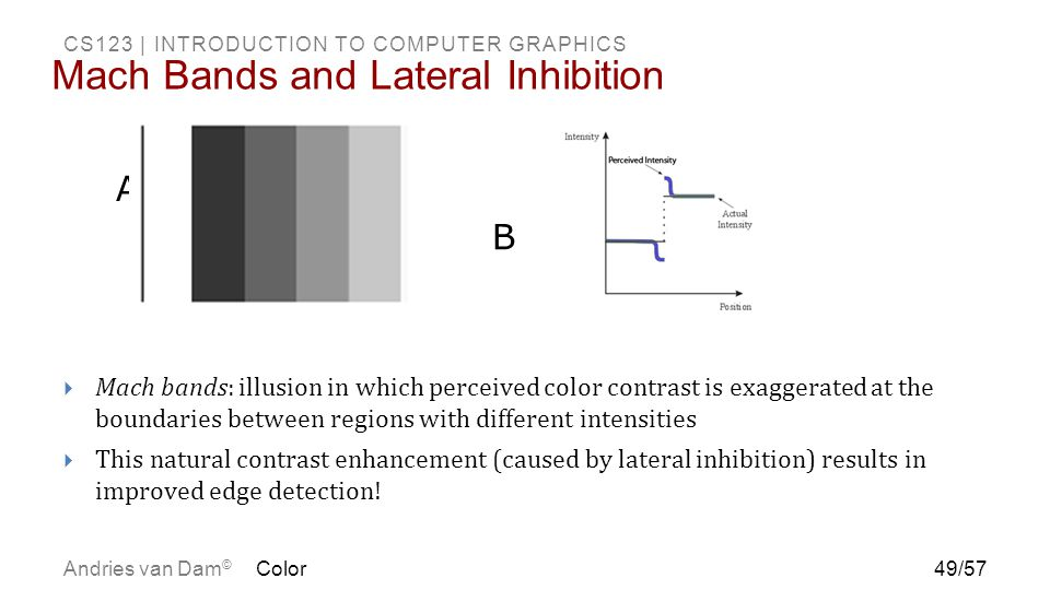 Mach Bands and Lateral Inhibition