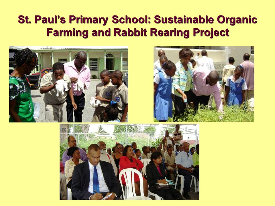 St. Paul's Primary School: Sustainable Organic Farming and Rabbit Rearing Project
