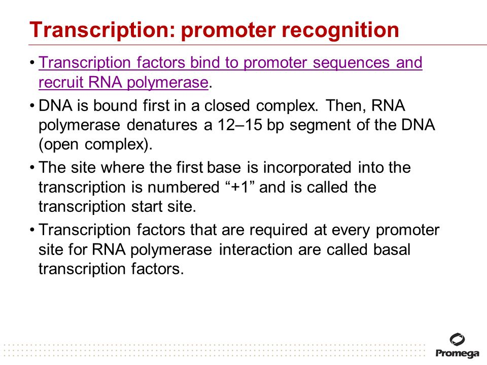 Transcription: promoter recognition
