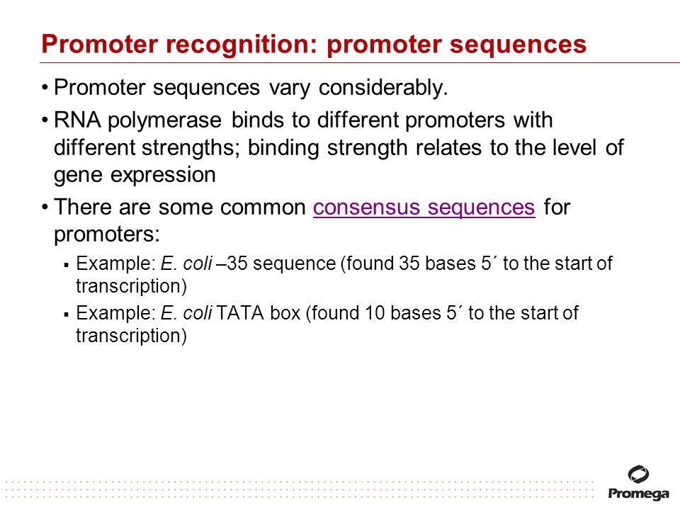 Promoter recognition: promoter sequences