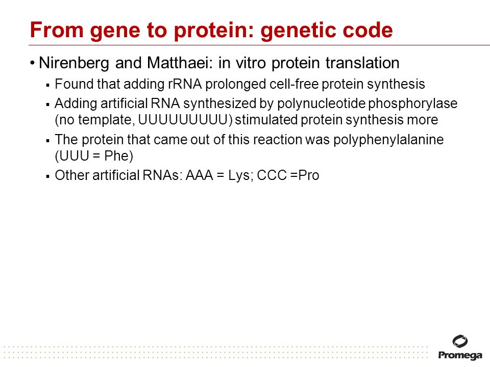 From gene to protein: genetic code