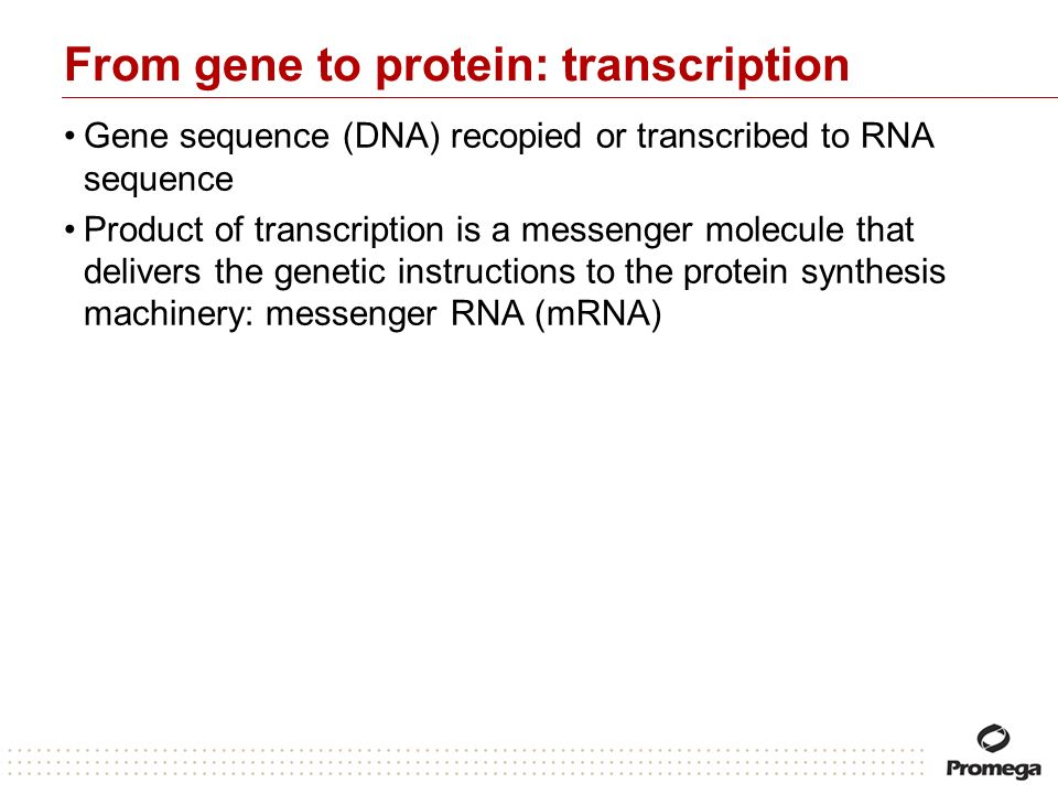 From gene to protein: transcription