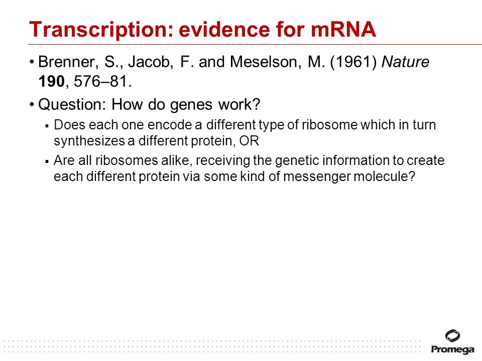 Transcription: evidence for mRNA