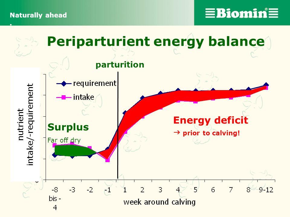 Periparturient energy balance