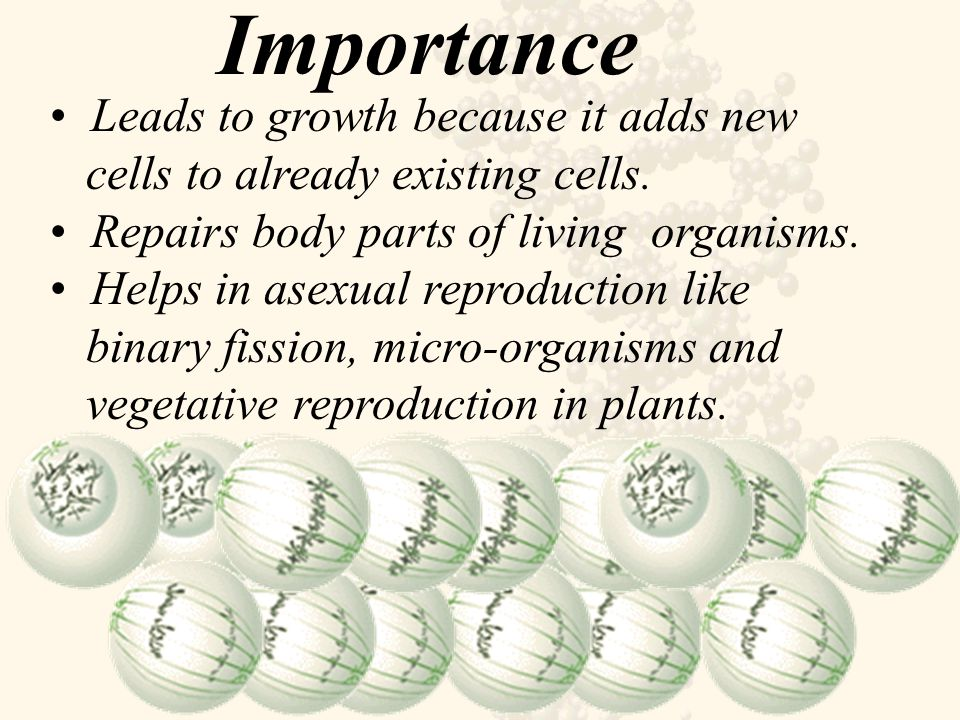 Importance Leads to growth because it adds new