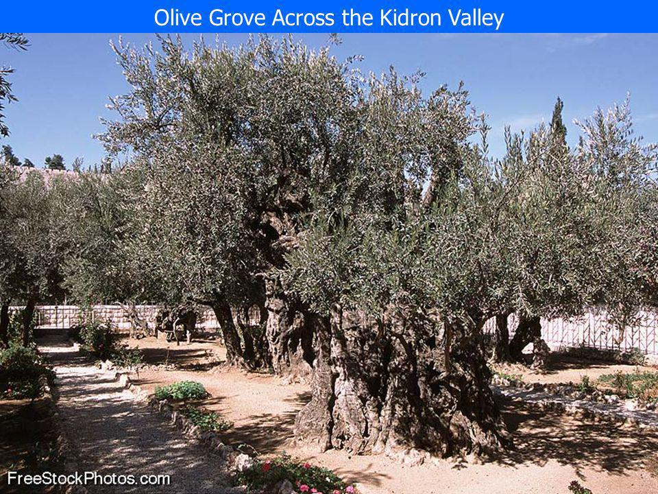 Olive Grove Across the Kidron Valley
