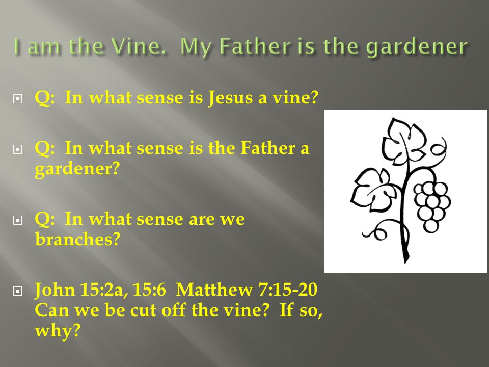 I am the Vine. My Father is the gardener