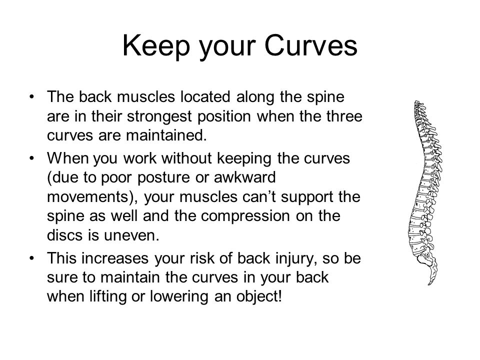 Keep your Curves The back muscles located along the spine are in their strongest position when the three curves are maintained.