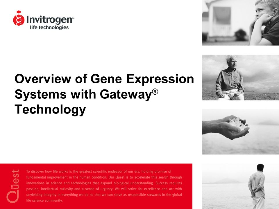 Overview of Gene Expression Systems with Gateway® Technology